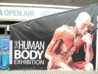 human-body